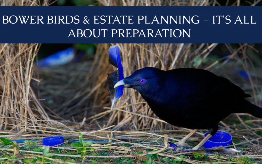 Bower Birds & Estate Planning – It's All About Preparation